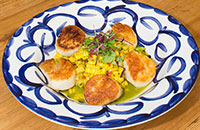 scallops at South Fork