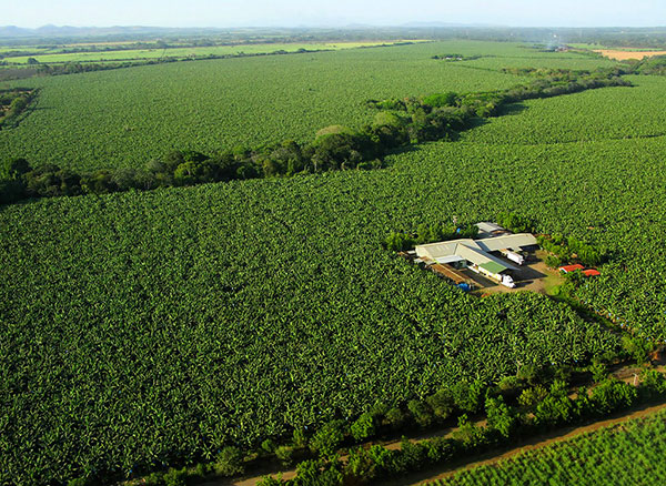 This aerial view shows the expanse of Ubilla's 400-acre plantation, Coquimba, and its packing plant. Coquimba, which has been in his family for more than two centuries, is the only Fairtrade International-certified banana plantation in Nicaragua.