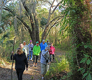 Hike the Jones Hammock Preserve.